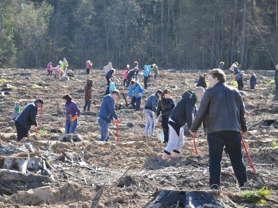 Около 170 тысяч деревьев высадят в Калужской области
