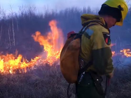 В России за сутки потушили 49 лесных пожаров