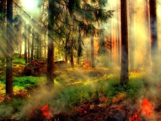 В Пуровском и Надымском районах ЯНАО сгорело более 11 га леса