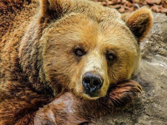 О медведе в окрестностях Салехарда сообщили в Сети