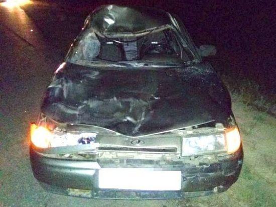 На трассе в Башкирии легковушка сбила корову – пострадала 19-летняя пассажирка