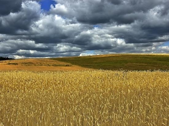 Более 83 тысяч тонн зерна намолотили в Калужской области