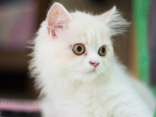 Создана вакцина, делающая кошек гипоалергенными