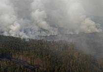 Кто-нибудь еще помнит про сибирские лесные пожары? А ведь в этом году общество как никогда сплотилось в общей истерии по этому поводу