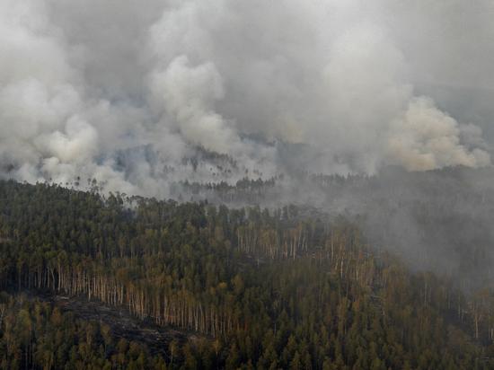 Лесные пожары связали с коррумпированным бизнесом: почему это никого не интересует