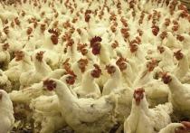 В Ярославской области птицефабрику оштрафовали за помет