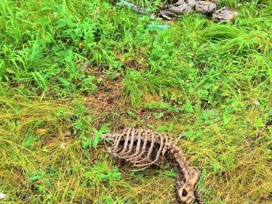 Свалку из трупов животных обнаружили жители Бийска