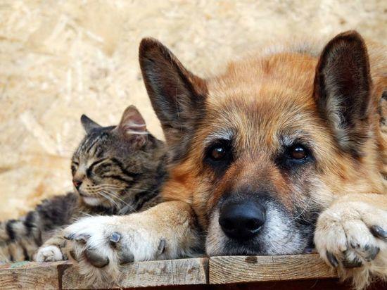 Калмыцкие волонтеры проведут акцию в пользу бездомных животных