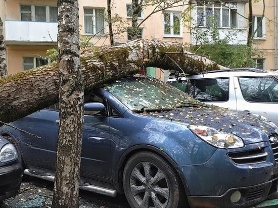Старое дерево обрушилось сразу на пять машин в Ростове