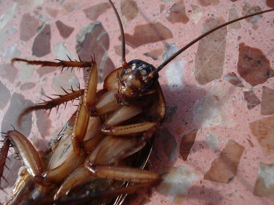 Жительница Салехарда рассказала о тараканах в салате в «Тифлисском дворике»