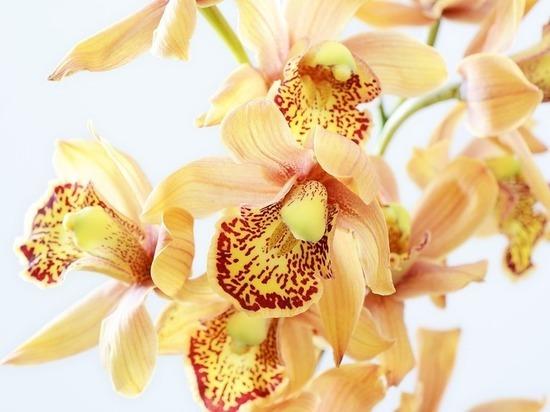 Названы комнатные цветы, вызывающие головную боль