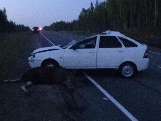 В Карелии 25-летний водитель сбил ночью лося