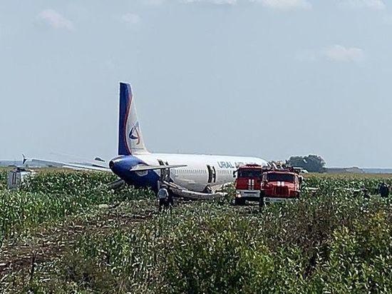 «Экипаж не виноват»: эксперты объяснили причину попадания птиц в А-321