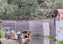 В Тверской области жители не могут спасти собаку из затопленной будки