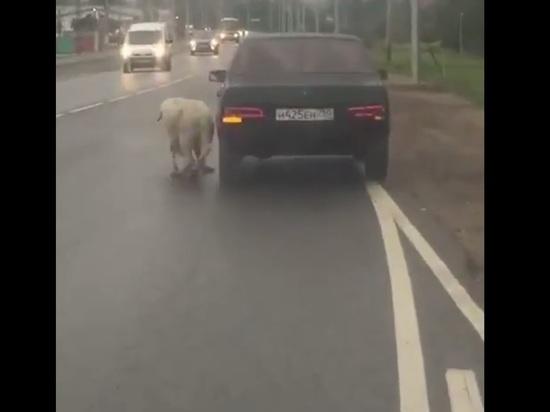 Живодер протащил собаку со сломанными лапами за машиной на поводке