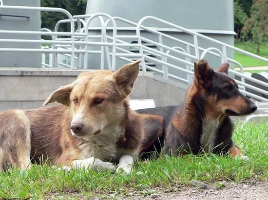 В Москве стали массово исчезать бездомные собаки и кошки