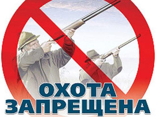 Убитый медведь обойдется браконьеру из НСО 300 тысяч рублей