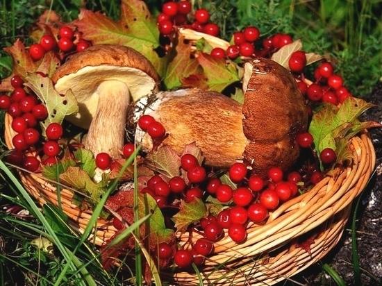 Мессенджеры снова пугают «налогами на грибы»