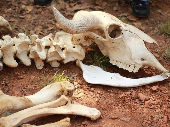 Обнаруженный под Омском могильник объявили смертельно опасным