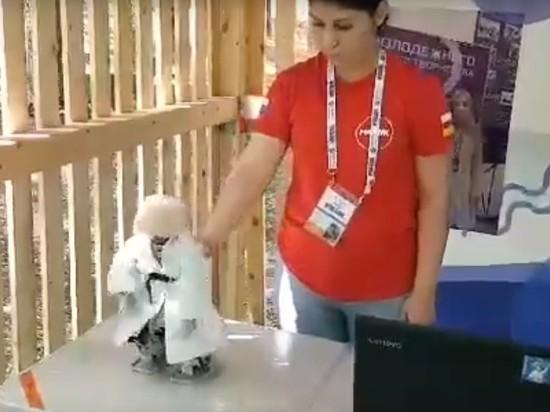 СМИ: показанного Рогозину танцующего лезгинку робота купили в США