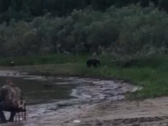 В Тарко-Сале к людям вышел медведь