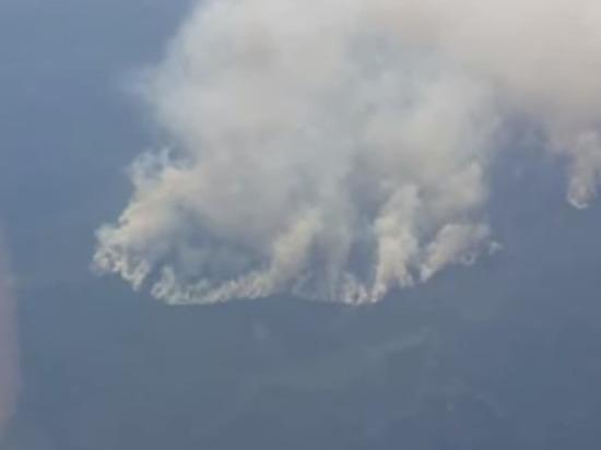 За сутки площадь лесных пожаров в РФ увеличилась на 8 тыс. га