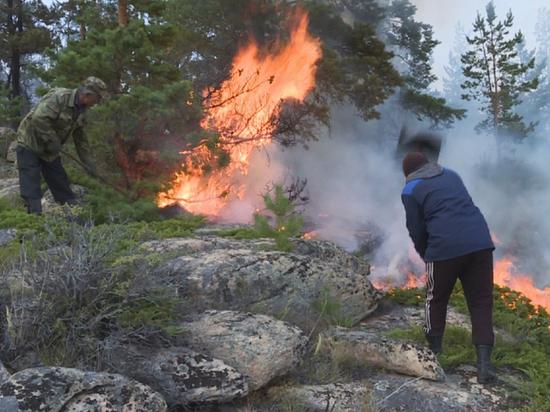 Как в Казахстане сохраняют леса и борются с браконьерами