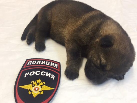 Жители Прикамья могут выбрать имя для полицейского щенка