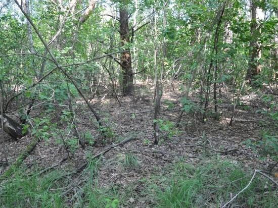 Под Рязанью в лесу нашли останки пропавшего 1,5 года назад мужчины