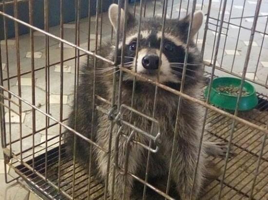 В Ивановской области контактный зоопарк «забыл» экзотических животных