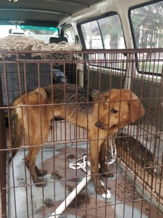 «Гнали воду по трубам»: волонтеры спасли еще одну застрявшую в канализации собаку