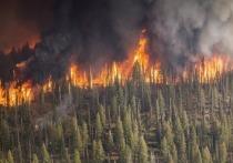 На Ямале который день не горят леса
