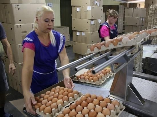 Эксперты помогают предприятиям региона повышать производительность труда
