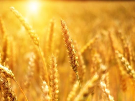 129 тонн запрещенных семян ввезла организация в Тульскую область