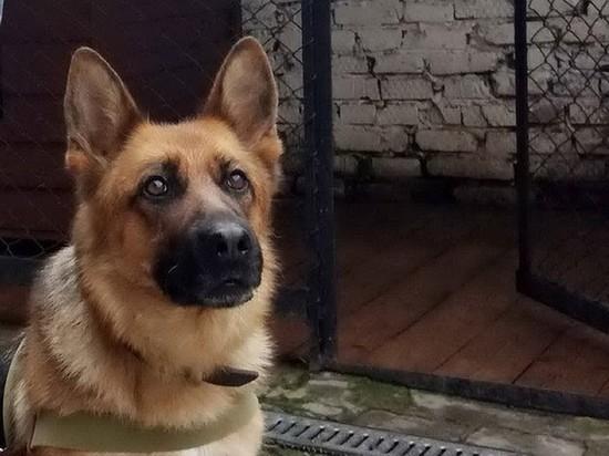 Служебная собака помогла задержать преступников в Глазове