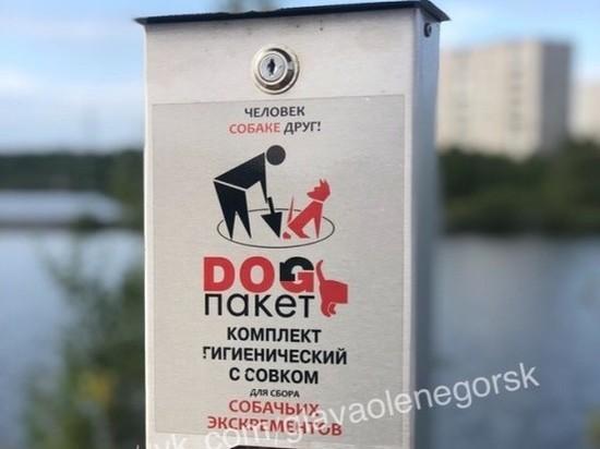 На улицах Оленегорска появились первые в Мурманской области дог-боксы