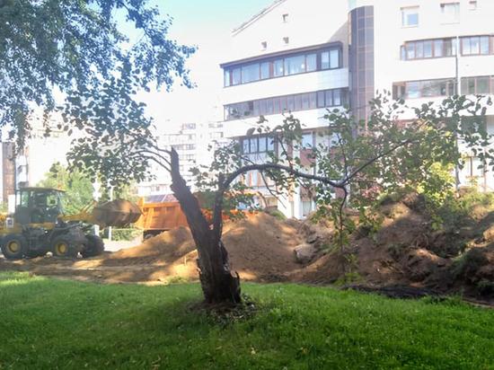 В Москве рабочие случайно сломали столетний боярышник, считавшийся памятником природы