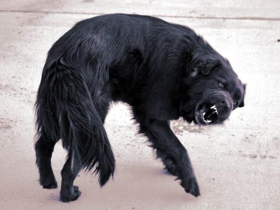 В ДНТ Бурятии обнаружена бешеная собака