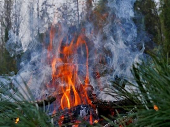 Почти 13 тысяч гектаров леса горит в Забайкалье, часть из них не тушат