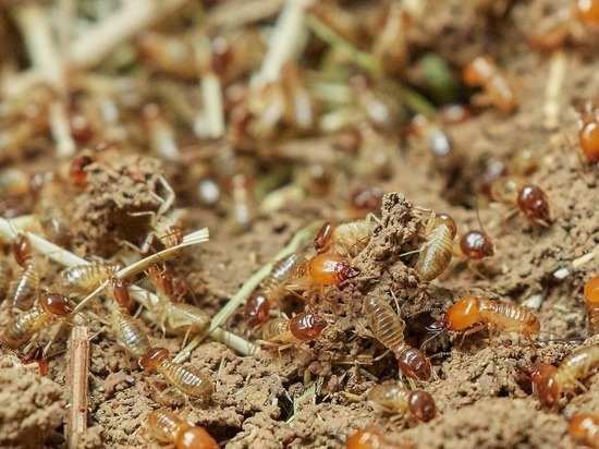 Термиты лишили женщину накоплений: съели 135 тысяч долларов