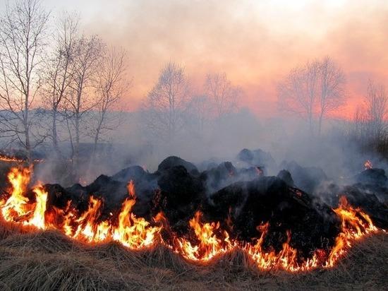 В Грачевском районе Ставрополья на большой площади горит поле и лес