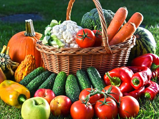 В Ярославской области соберут хороший урожай овощей - МК Ярославль
