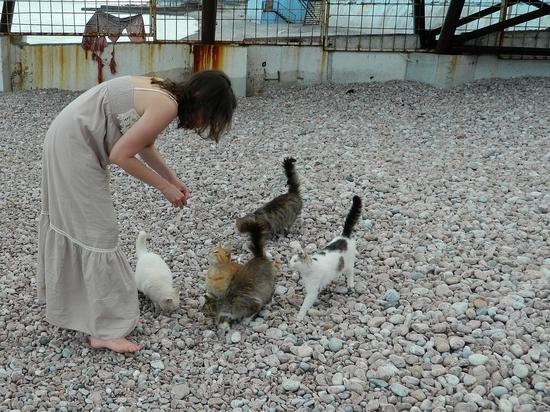 В Крыму набирает обороты кампания по стерилизации бродячих собак и кошек
