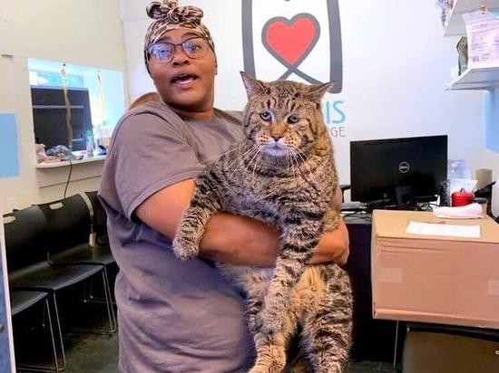 Гигантский кот из США покорил пользователей Сети