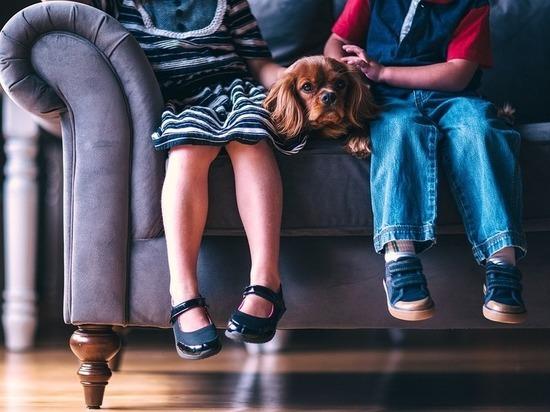 Названы способы, которые помогут волгоградцам очистить грязный диван