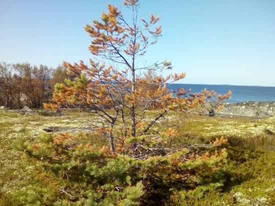Власти Кемского района опровергают наличие радиации на севере Карелии