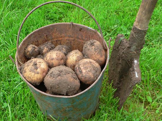 Подгон от Минтруда: МРОТ повысили до роста стоимости картошки
