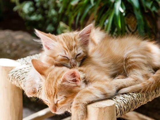Как продлить жизнь домашней кошке, узнали волгоградцы
