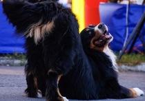 Собаки-танцоры открывали своим выступлением программу городских мероприятий на одной из сцен парка