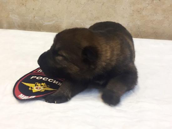 В Перми выбрали кличку для полицейского щенка